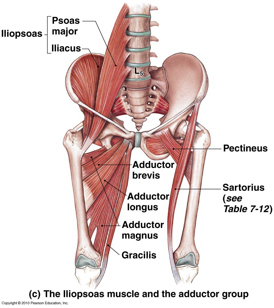 Those Hips Dont Lie Hip Accessory Exercises Pure Health Performance