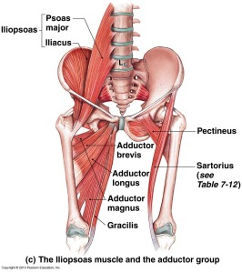 Musculature_Deep_Hip